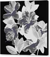 Azalea Branch Canvas Print
