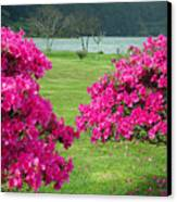 Azaleas At The Azores Canvas Print