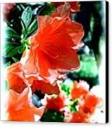 Azaleas In The Spring Canvas Print