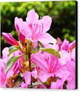 Azaleas Pink Azalea Flowers Artwork 12 Landscape Art Prints Canvas Print