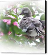 Baby Bird In Crape Myrtle Tree Canvas Print by Linda Phelps