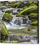 Back Country Stream Canvas Print