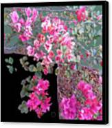 Back Door Bougainvillea Canvas Print by Eikoni Images