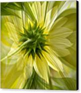 Back Petal Canvas Print