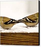 Back To Back American Gold Finches Canvas Print
