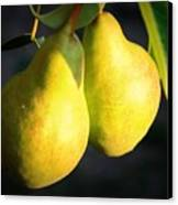 Backyard Garden Series - Two Pears Canvas Print