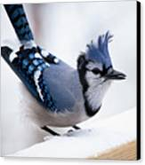 Bad Feather Day Canvas Print by Al  Mueller