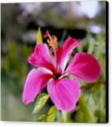 Bahamian Flower Canvas Print by Deborah  Crew-Johnson
