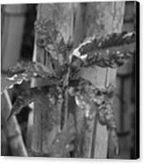 Bamboo Flower Canvas Print