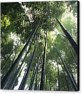 Bamboo Forest Canvas Print by Mitch Warner - Printscapes