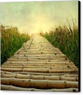 Bamboo Path In Grass At Sunrise Canvas Print