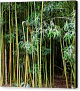 Bamboo Wind Chimes  Waimoku Falls Trail  Hana  Maui Hawaii Canvas Print