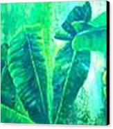 Banan Leaves 5 Canvas Print
