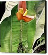 Banana Blossom Canvas Print