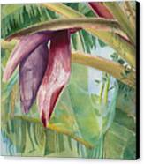 Banana Flower Canvas Print by AnnaJo Vahle
