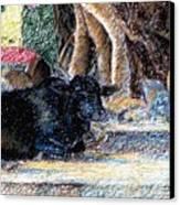 Banyan Tree Bull Canvas Print by Claudio  Fiori