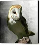 Barn Owl Canvas Print by Crispin  Delgado