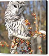 Barred Owl Portrait Canvas Print by Cindy Lindow