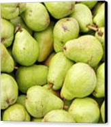 Bartlett Pears Canvas Print