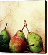 Bartlett Pears Canvas Print by Stephanie Frey