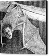Bat Man Canvas Print by Arline Wagner