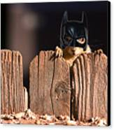 Bat Squirrel  The Cape Crusader Known For Putting Away Nuts.  Canvas Print