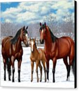 Bay Horses In Winter Pasture Canvas Print by Crista Forest