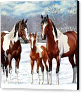 Bay Paint Horses In Winter Canvas Print
