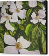 Bc Dogwoods Canvas Print