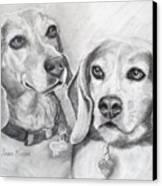 Beagle Boys Canvas Print by Susan A Becker