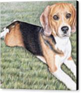 Beagle Canvas Print