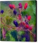 Bear Fodder Canvas Print