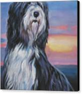 Bearded Collie Sunset Canvas Print by Lee Ann Shepard