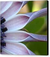 Beautiful 002 Canvas Print