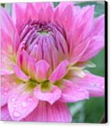 Beautiful Flower In Daybreak Canvas Print