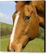 Beautiful Horse Portrait Canvas Print by Meirion Matthias