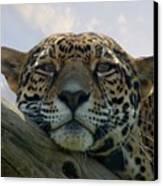 Beautiful Jaguar Canvas Print by Sandy Keeton