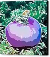 Beautiful Pink Clowfish Canvas Print