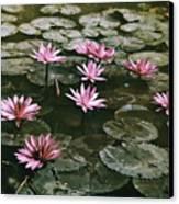 Beautiful Pink Lotus Water Lilies Bloom Canvas Print by W. Robert Moore
