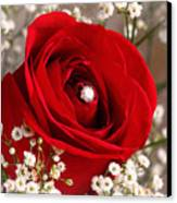 Beautiful Red Rose With Diamond Canvas Print by Tracie Kaska
