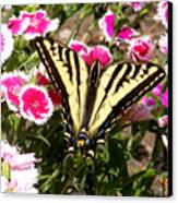 Beautyfly In Pink Canvas Print