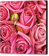 Bed Of Roses Canvas Print by Carlos Caetano