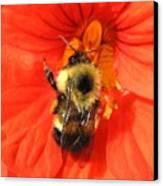 Bee And Nasturtium Canvas Print