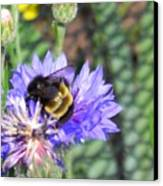 Bee Bee Canvas Print