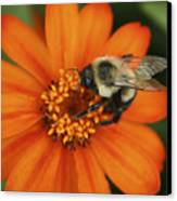 Bee On Aster Canvas Print