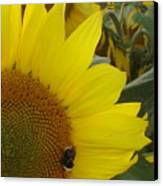 Bee On Sunflower 1 Canvas Print
