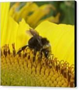 Bee On Sunflower 2 Canvas Print