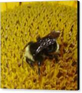 Bee On Sunflower 4 Canvas Print