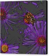 Bee With Asters On Gray Canvas Print