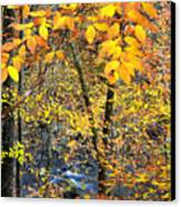 Beech Leaves Birch River Canvas Print by Thomas R Fletcher